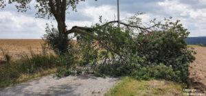 Einsatz 33 2020 Baum auf Fahrbahn_Beitragsbild