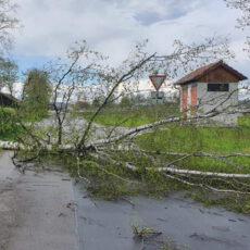 Einsatz 16 2021 Baum auf Fahrbahn Michelsdorf Beitragsbild