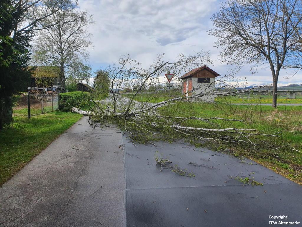 Einsatz 16 2021 Baum auf Fahrbahn Michelsdorf